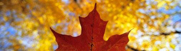 fall, canada, Ron Watts / Getty Images